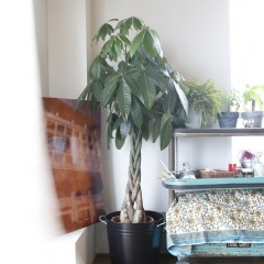 とても広いリビング、部屋の片隅にあるグリーンや絵も映えます。