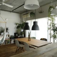 お引っ越し後の南千住リノベは緑あふれる部屋へと変わっていました。