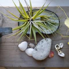 鎌倉山のお花屋さんでセレクトされた植物の横には、海で集めた石が置かれていました