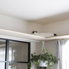 ご自身もソファで寛ぎながら、猫たちはキャットウォークで寛いで…幸せな瞬間、とお施主様。